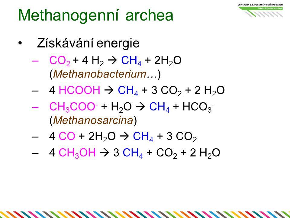 Methanogenní archea Získávání energie –CO 2 + 4 H 2  CH 4 + 2H 2 O (Methanobacterium…) –4 HCOOH  CH 4 + 3 CO 2 + 2 H 2 O –CH 3 COO - + H 2 O  CH 4