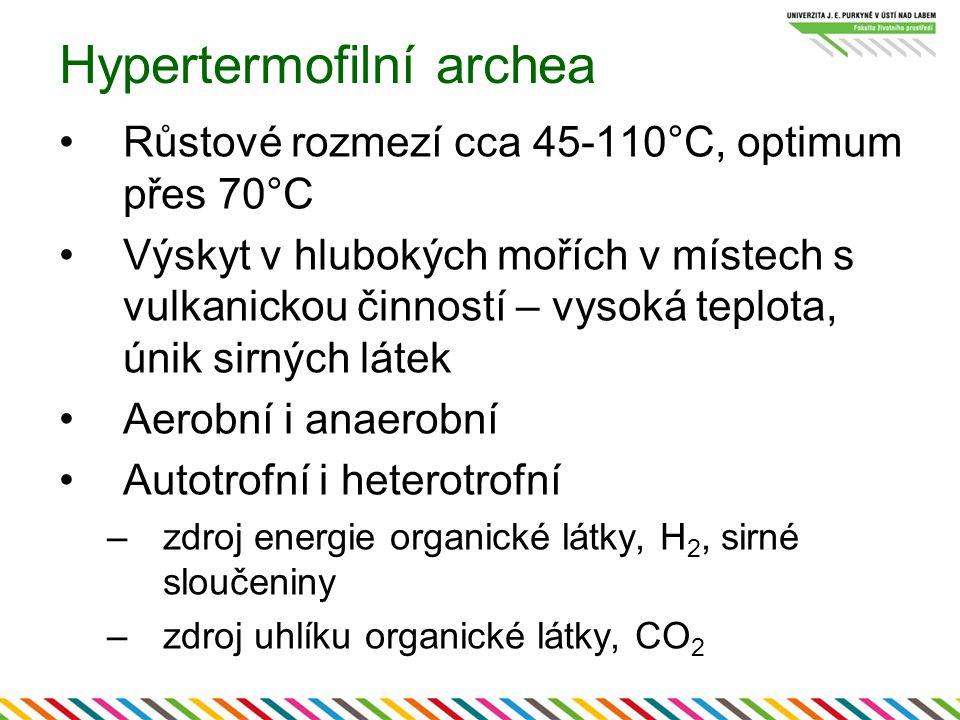 Hypertermofilní archea Růstové rozmezí cca 45-110°C, optimum přes 70°C Výskyt v hlubokých mořích v místech s vulkanickou činností – vysoká teplota, ún