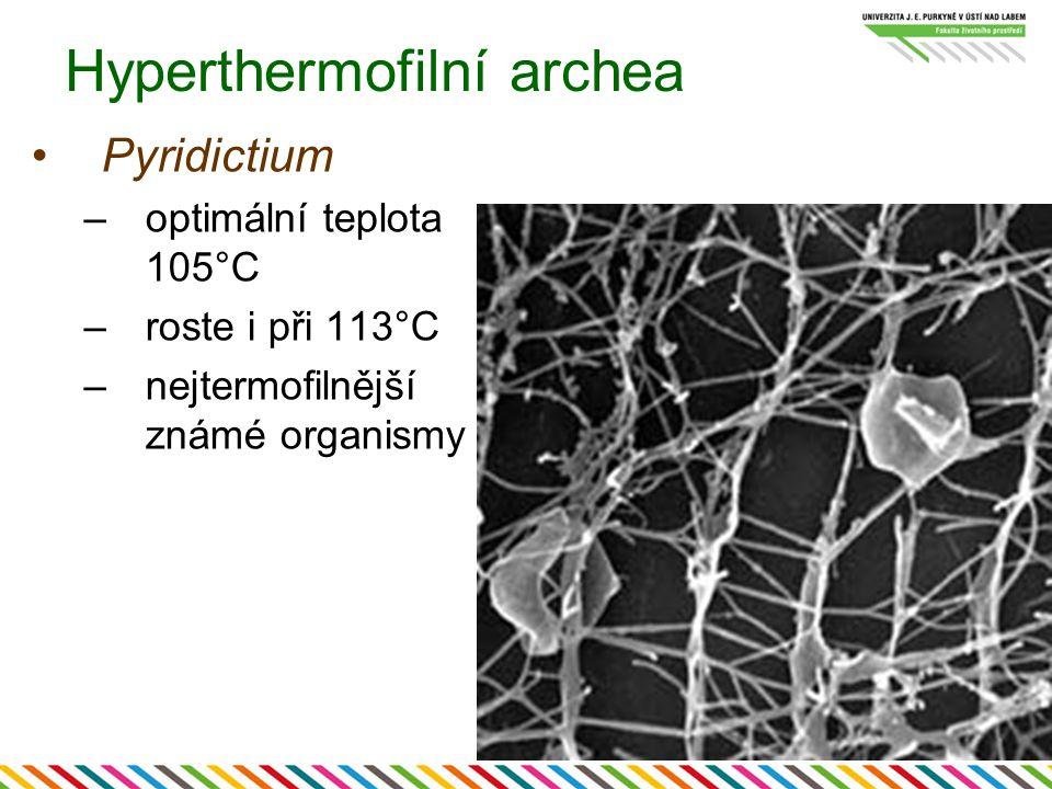 Hyperthermofilní archea Pyridictium –optimální teplota 105°C –roste i při 113°C –nejtermofilnější známé organismy