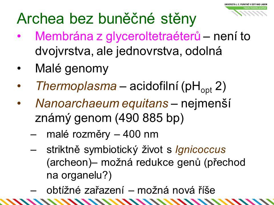 Archea bez buněčné stěny Membrána z glyceroltetraéterů – není to dvojvrstva, ale jednovrstva, odolná Malé genomy Thermoplasma – acidofilní (pH opt 2)