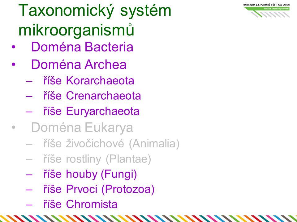 Taxonomický systém mikroorganismů Doména Bacteria Doména Archea –říše Korarchaeota –říše Crenarchaeota –říše Euryarchaeota Doména Eukarya –říše živoči