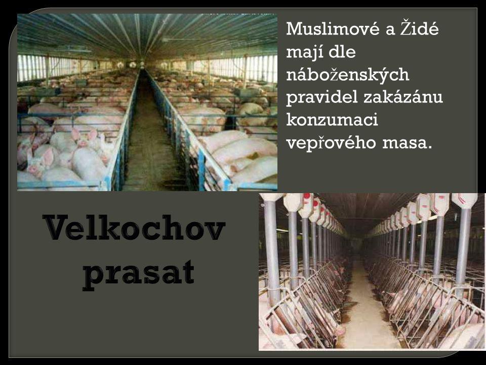 Muslimové a Ž idé mají dle nábo ž enských pravidel zakázánu konzumaci vep ř ového masa.