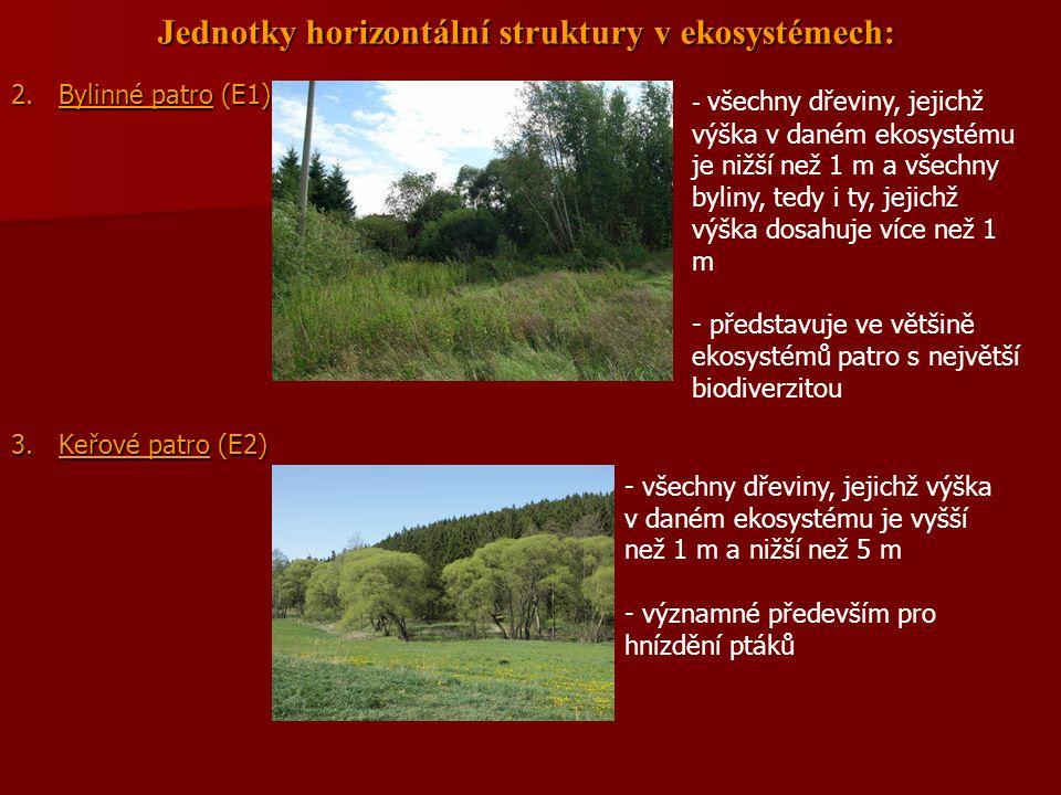 Jednotky horizontální struktury v ekosystémech: 2. Bylinné patro (E1) 3. Keřové patro (E2) - všechny dřeviny, jejichž výška v daném ekosystému je nižš