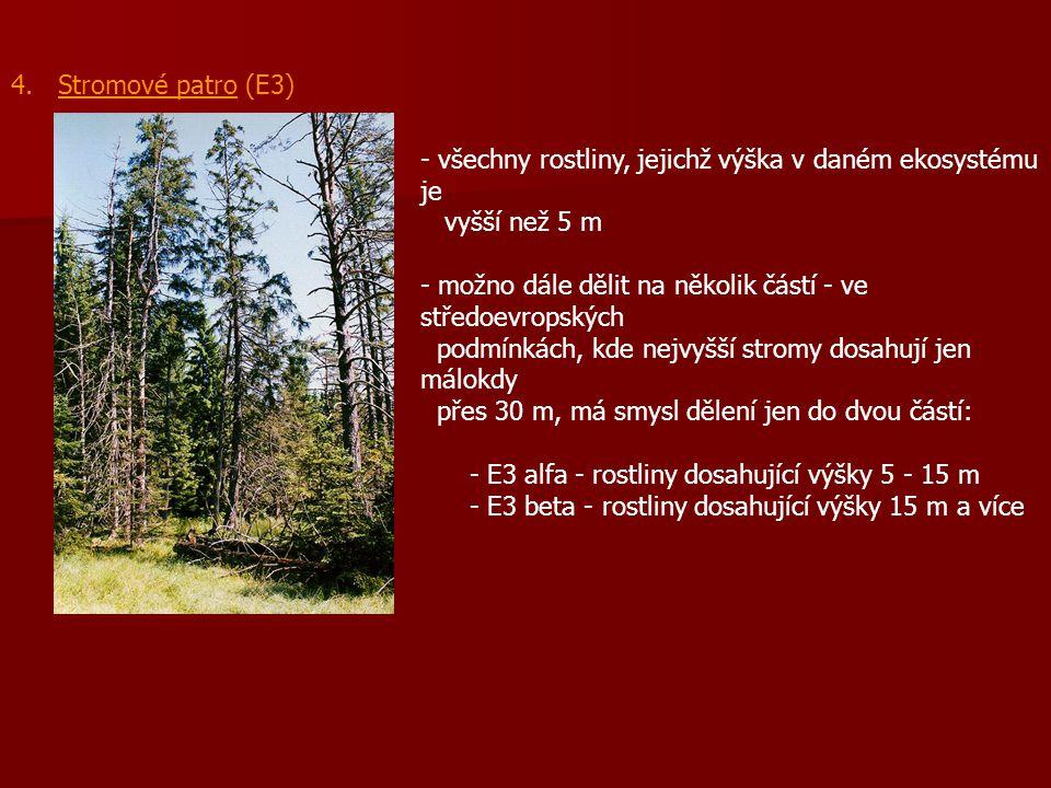 4. Stromové patro (E3) - - všechny rostliny, jejichž výška v daném ekosystému je vyšší než 5 m - možno dále dělit na několik částí - ve středoevropský