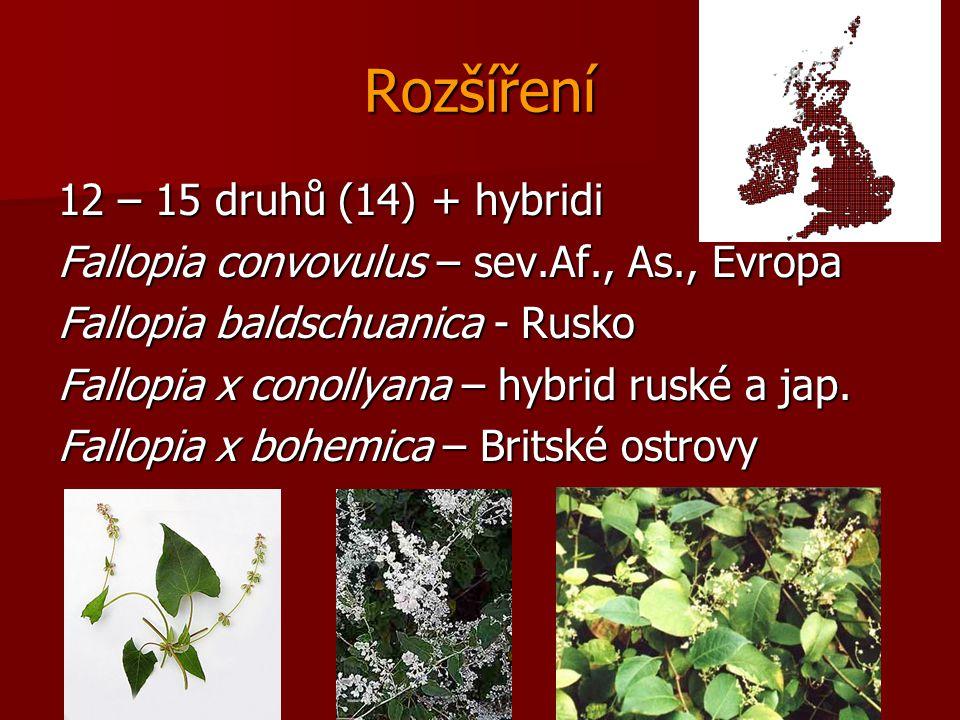 Rozšíření 12 – 15 druhů (14) + hybridi Fallopia convovulus – sev.Af., As., Evropa Fallopia baldschuanica - Rusko Fallopia x conollyana – hybrid ruské