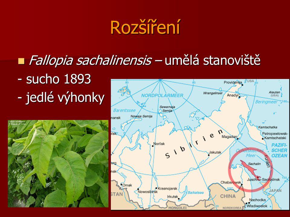 Rozšíření Fallopia sachalinensis – umělá stanoviště Fallopia sachalinensis – umělá stanoviště - sucho 1893 - jedlé výhonky