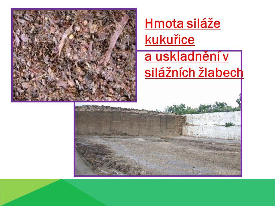 Hmota siláže kukuřice a uskladnění v silážních žlabech