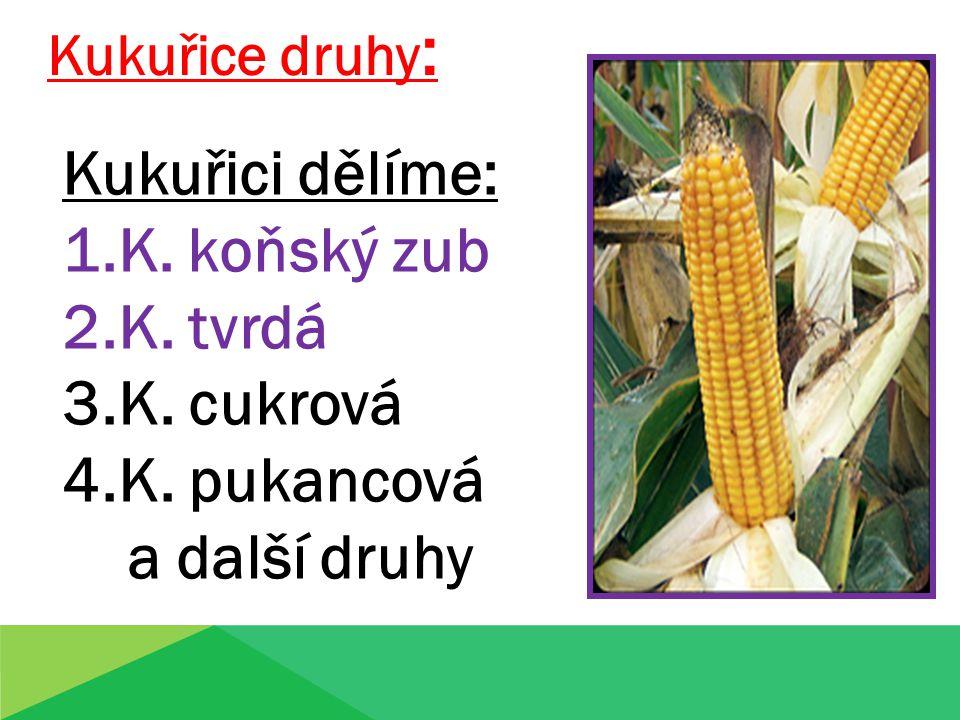 Kukuřice druhy : Kukuřici dělíme: 1.K. koňský zub 2.K. tvrdá 3.K. cukrová 4.K. pukancová a další druhy