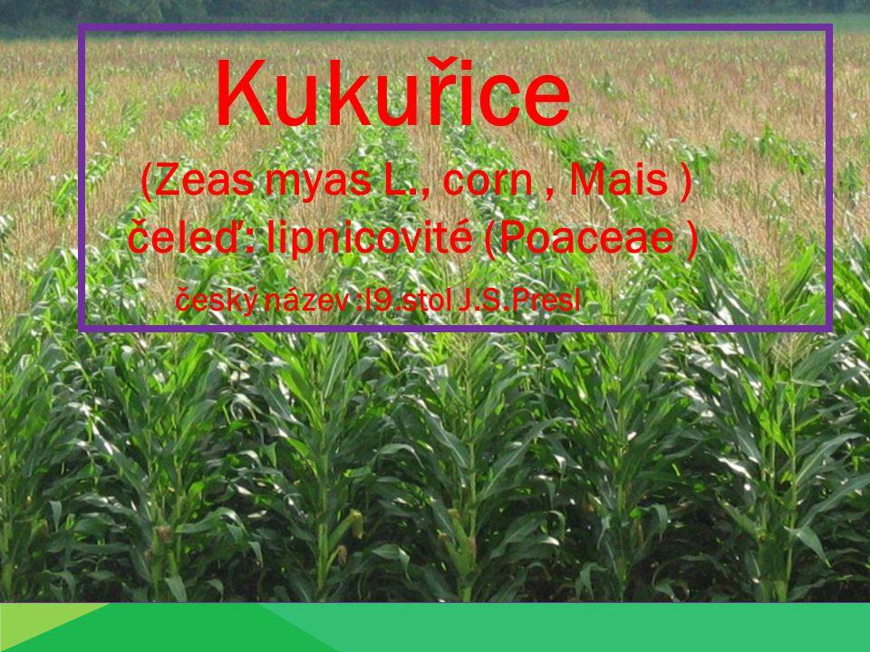 Kukuřice (Zeas myas L., corn, Mais ) čeleď: lipnicovité (Poaceae ) český název :l9.stol J.S.Presl