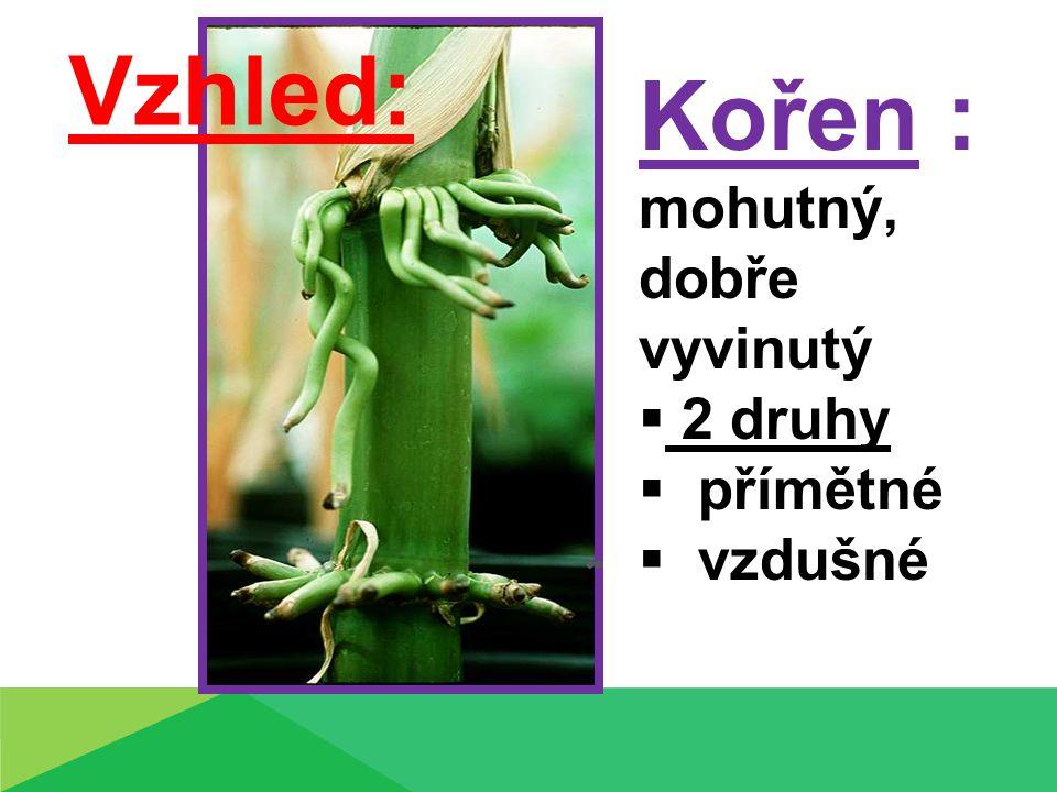 ,,, Kořen : mohutný, dobře vyvinutý  2 druhy  přímětné  vzdušné Vzhled: