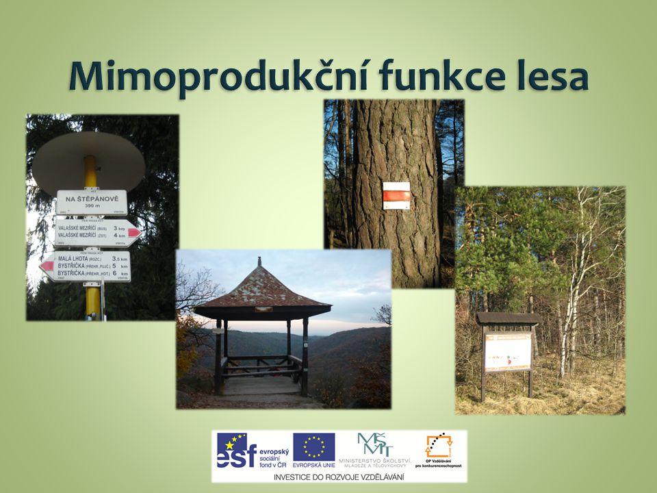 lesy hospodářské lesy zvláštního určení lesy ochranné