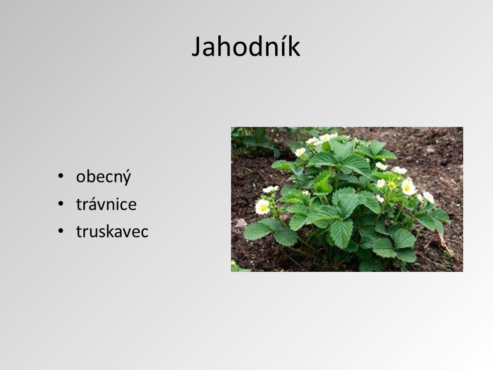 Jahodník obecný trávnice truskavec
