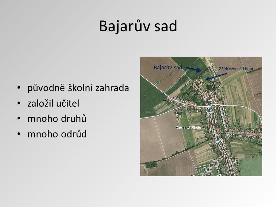Bajarův sad původně školní zahrada založil učitel mnoho druhů mnoho odrůd ZŠ Hroznová Lhota Bajarův sad