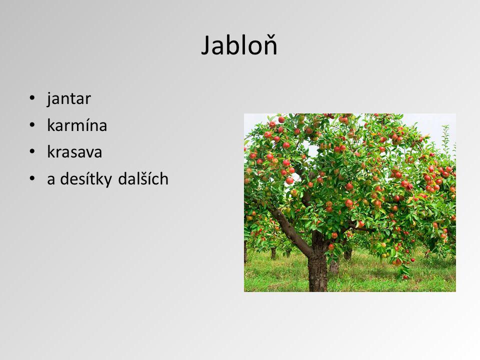 Jabloň jantar karmína krasava a desítky dalších