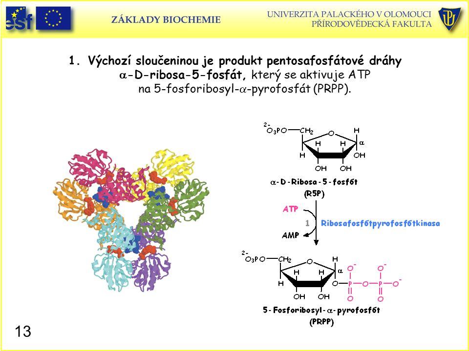 1.Výchozí sloučeninou je produkt pentosafosfátové dráhy  -D-ribosa-5-fosfát, který se aktivuje ATP na 5-fosforibosyl-  -pyrofosfát (PRPP). 13