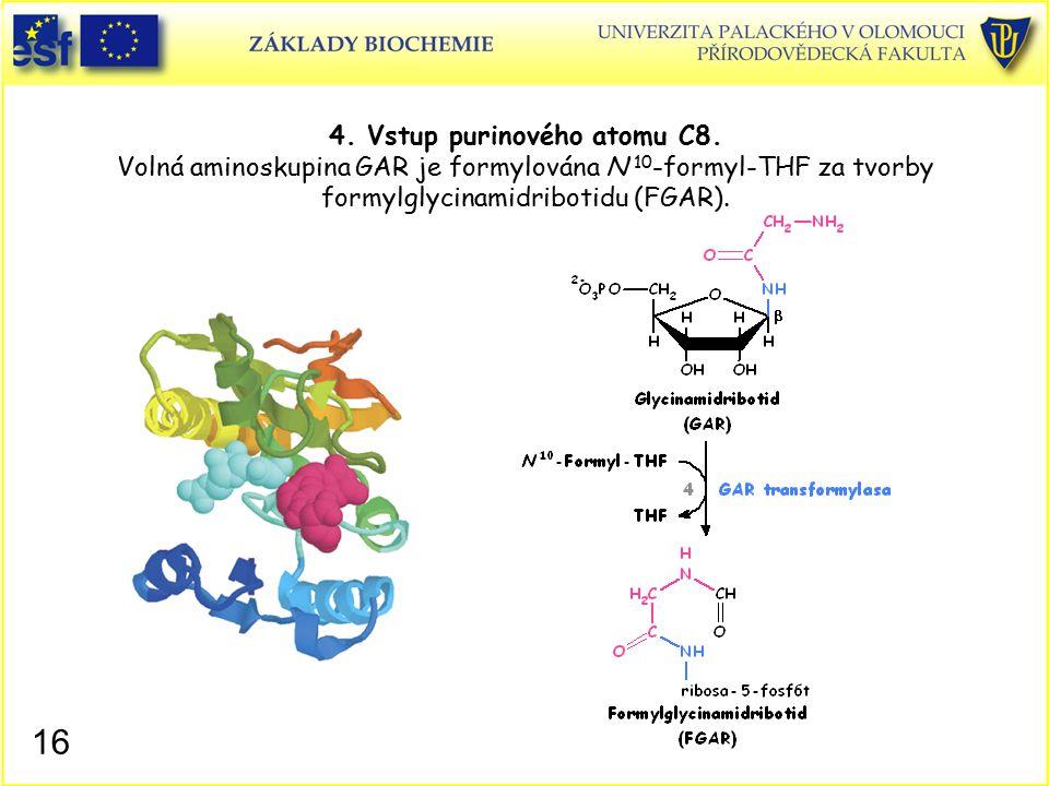 4. Vstup purinového atomu C8. Volná aminoskupina GAR je formylována N 10 -formyl-THF za tvorby formylglycinamidribotidu (FGAR). 16