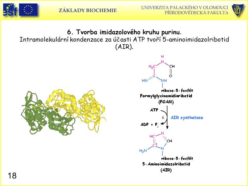 6. Tvorba imidazolového kruhu purinu. Intramolekulární kondenzace za účasti ATP tvoří 5-aminoimidazolribotid (AIR). 18