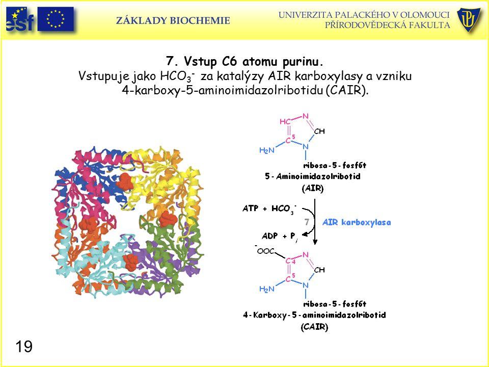 7. Vstup C6 atomu purinu. Vstupuje jako HCO 3 - za katalýzy AIR karboxylasy a vzniku 4-karboxy-5-aminoimidazolribotidu (CAIR). 19