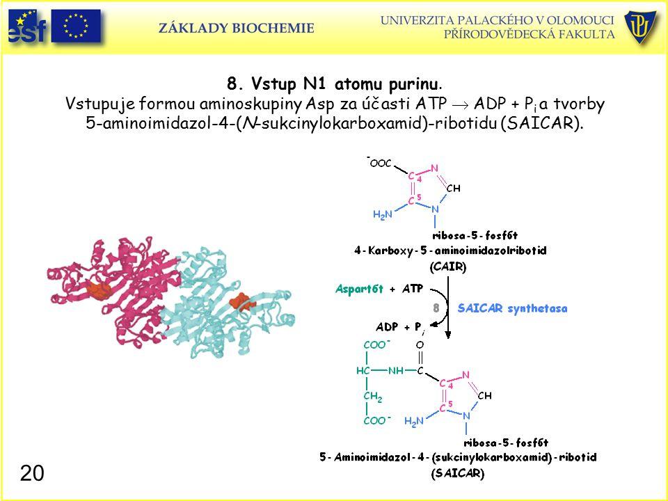 8. Vstup N1 atomu purinu. Vstupuje formou aminoskupiny Asp za účasti ATP  ADP + P i a tvorby 5-aminoimidazol-4-(N-sukcinylokarboxamid)-ribotidu (SAIC