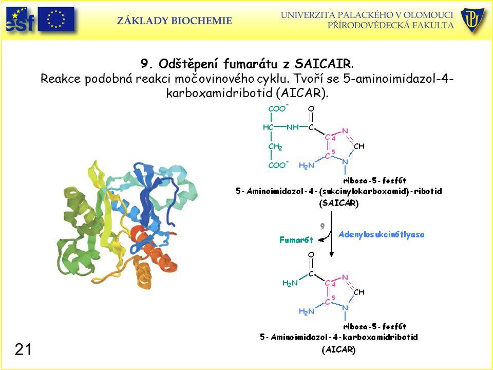 9. Odštěpení fumarátu z SAICAIR. Reakce podobná reakci močovinového cyklu. Tvoří se 5-aminoimidazol-4- karboxamidribotid (AICAR). 21