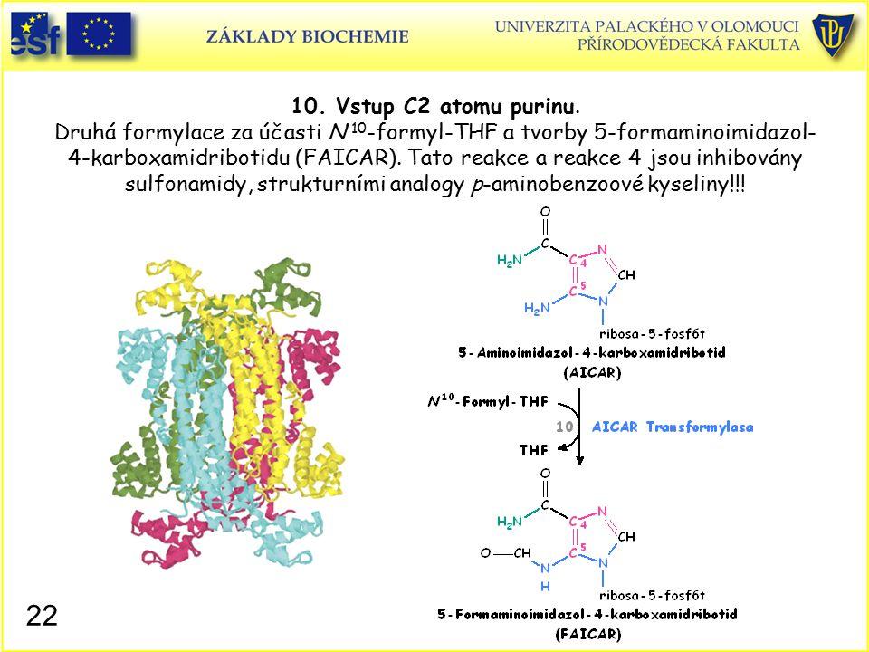 10. Vstup C2 atomu purinu. Druhá formylace za účasti N 10 -formyl-THF a tvorby 5-formaminoimidazol- 4-karboxamidribotidu (FAICAR). Tato reakce a reakc