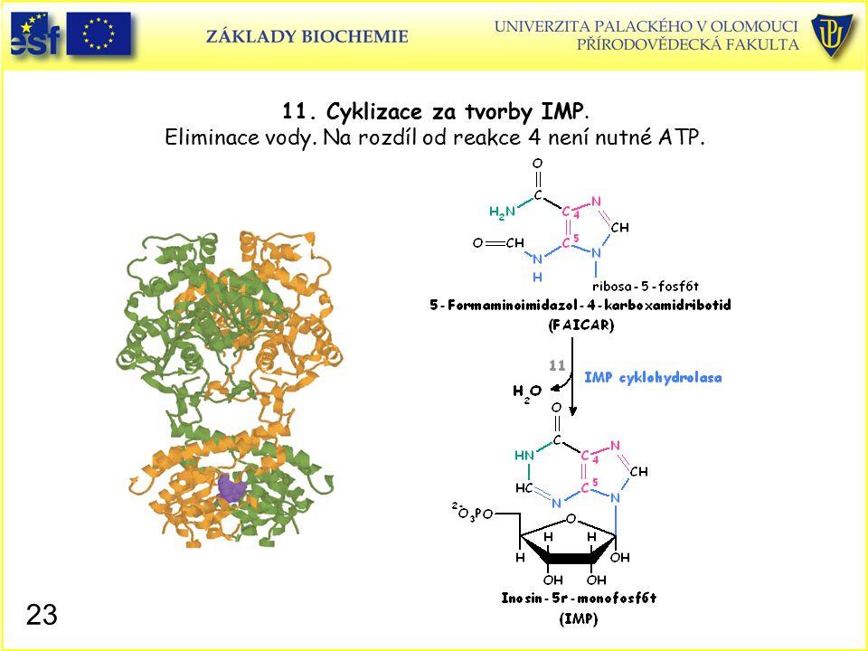 11. Cyklizace za tvorby IMP. Eliminace vody. Na rozdíl od reakce 4 není nutné ATP. 23