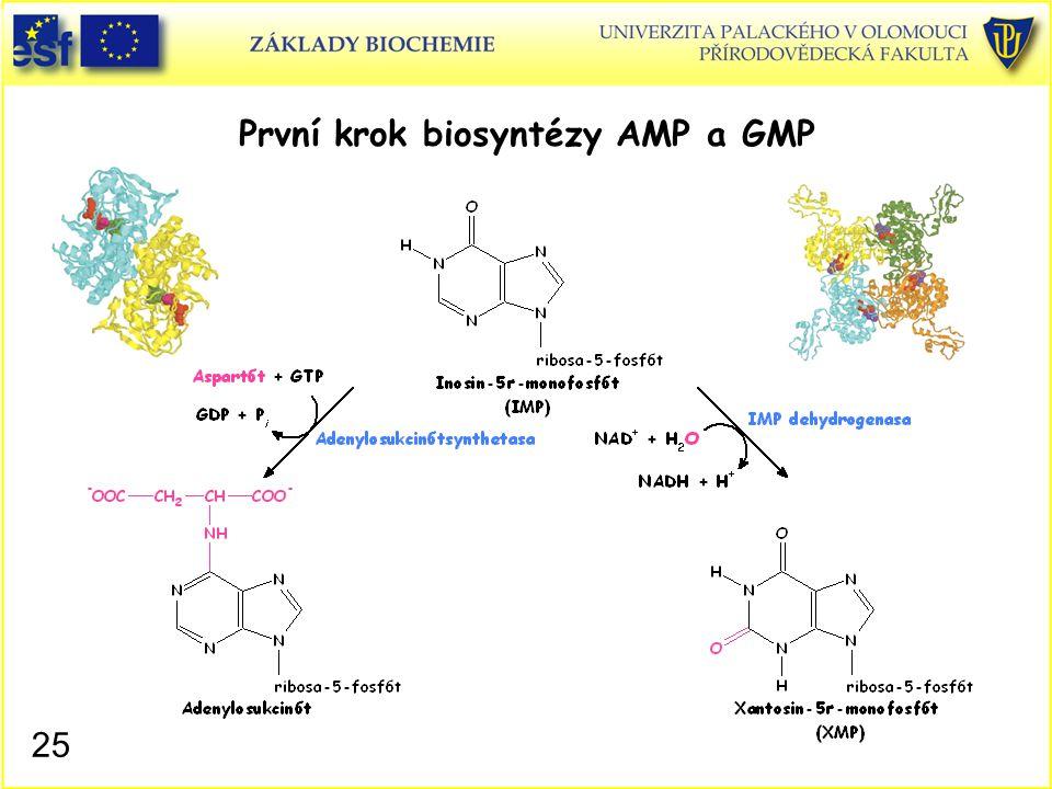 První krok biosyntézy AMP a GMP 25