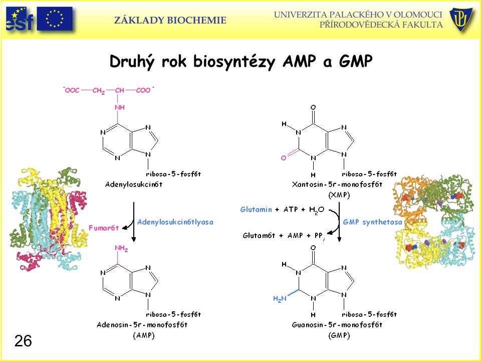 Druhý rok biosyntézy AMP a GMP 26