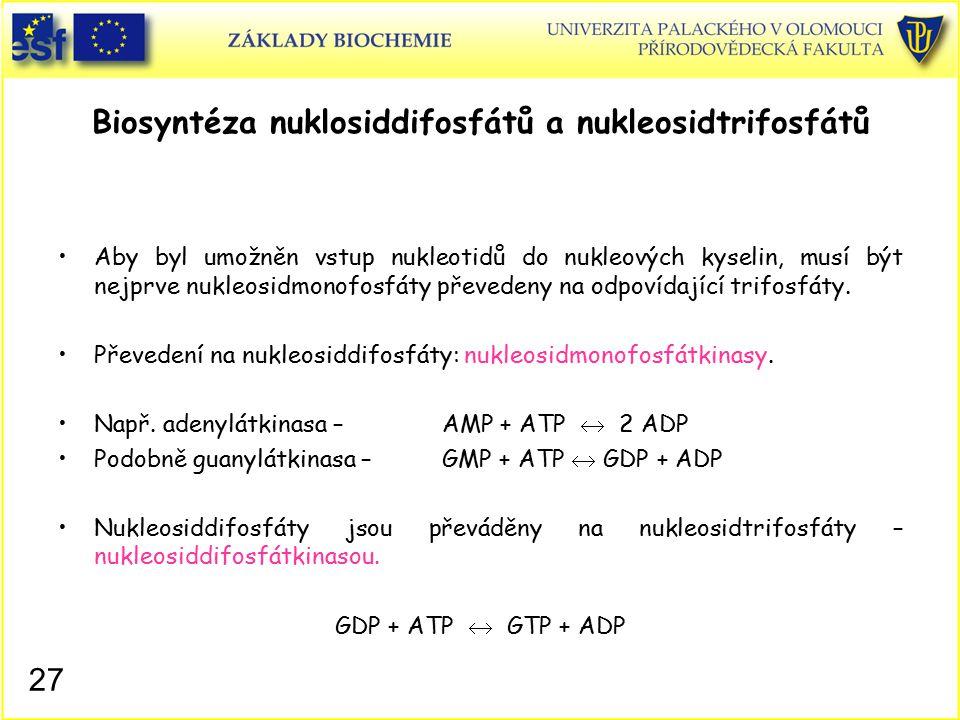 Biosyntéza nuklosiddifosfátů a nukleosidtrifosfátů Aby byl umožněn vstup nukleotidů do nukleových kyselin, musí být nejprve nukleosidmonofosfáty převe