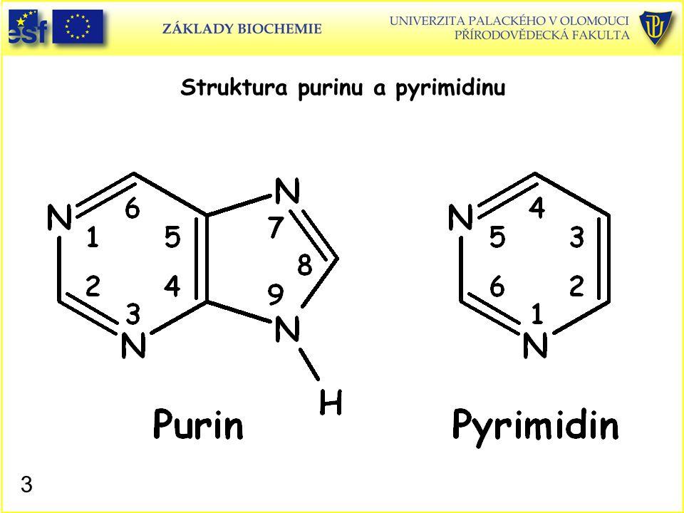 Struktura purinu a pyrimidinu 3
