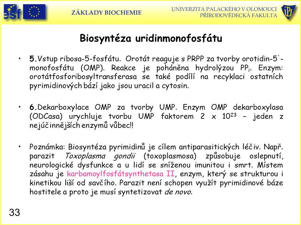 Biosyntéza uridinmonofosfátu 5.Vstup ribosa-5-fosfátu. Orotát reaguje s PRPP za tvorby orotidin-5 ´ - monofosfátu (OMP). Reakce je poháněna hydrolýzou