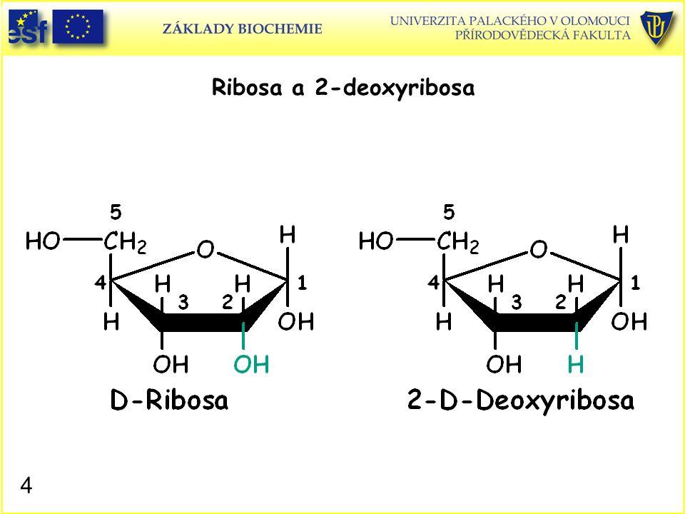 3.Vstup purinových atomů C4, C5 a N7.