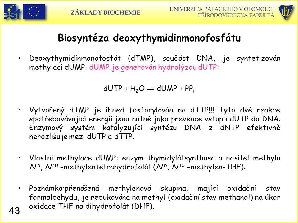 Biosyntéza deoxythymidinmonofosfátu Deoxythymidinmonofosfát (dTMP), součást DNA, je syntetizován methylací dUMP. dUMP je generován hydrolýzou dUTP: dU