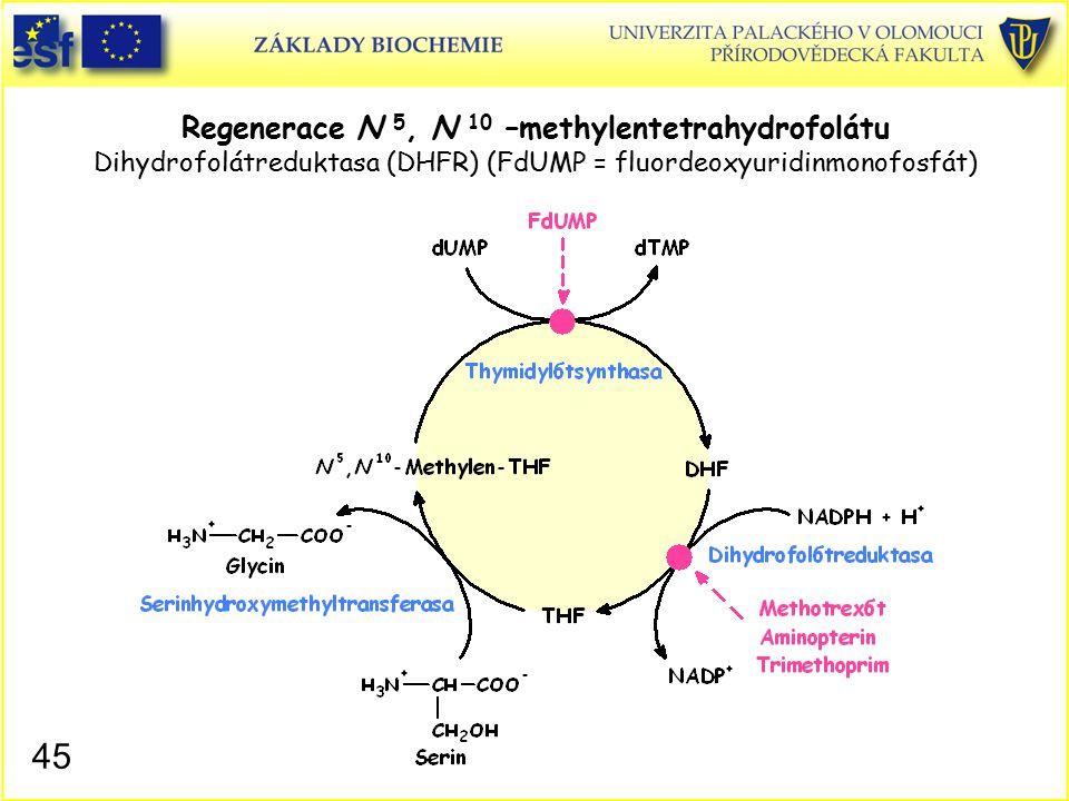 Regenerace N 5, N 10 –methylentetrahydrofolátu Dihydrofolátreduktasa (DHFR) (FdUMP = fluordeoxyuridinmonofosfát) 45