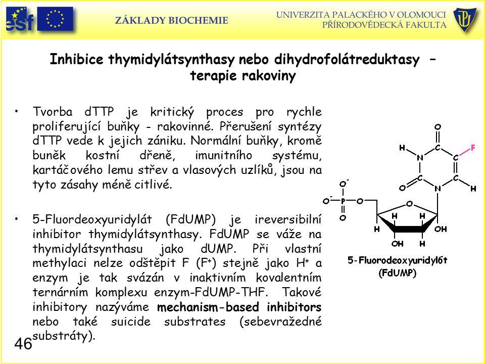 Inhibice thymidylátsynthasy nebo dihydrofolátreduktasy – terapie rakoviny Tvorba dTTP je kritický proces pro rychle proliferující buňky - rakovinné. P