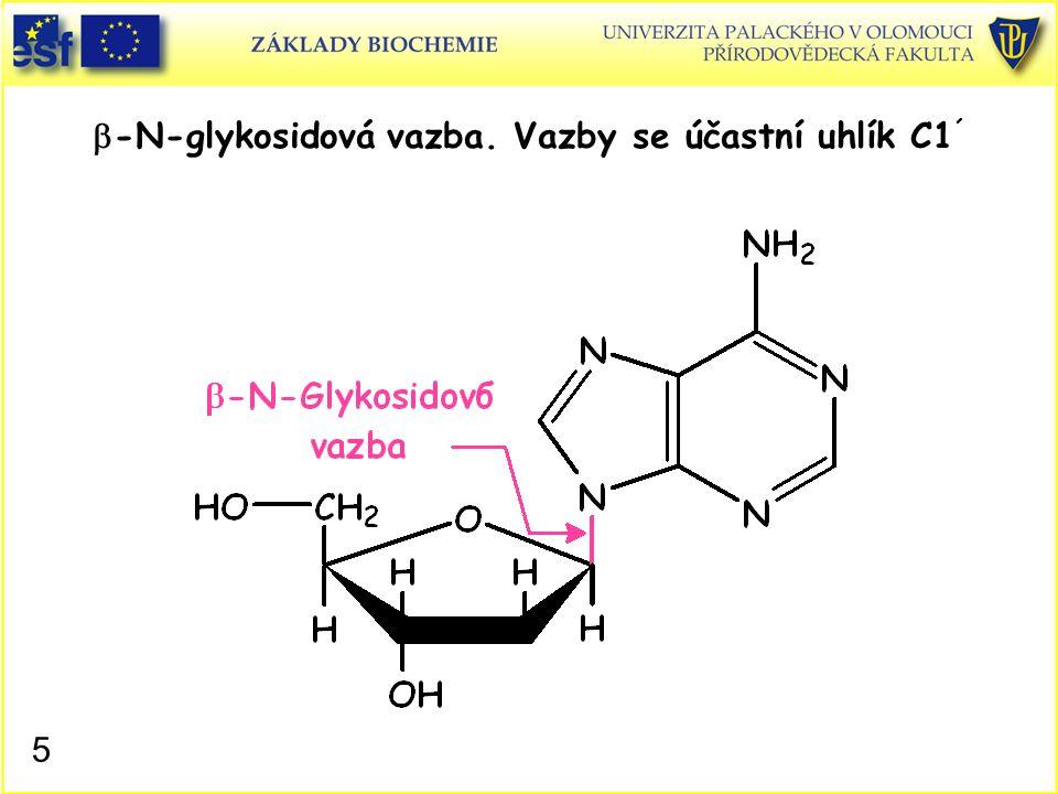  -N-glykosidová vazba. Vazby se účastní uhlík C1 ´ 5