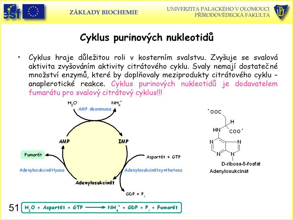 Cyklus purinových nukleotidů Cyklus hraje důležitou roli v kosterním svalstvu. Zvyšuje se svalová aktivita zvyšováním aktivity citrátového cyklu. Sval