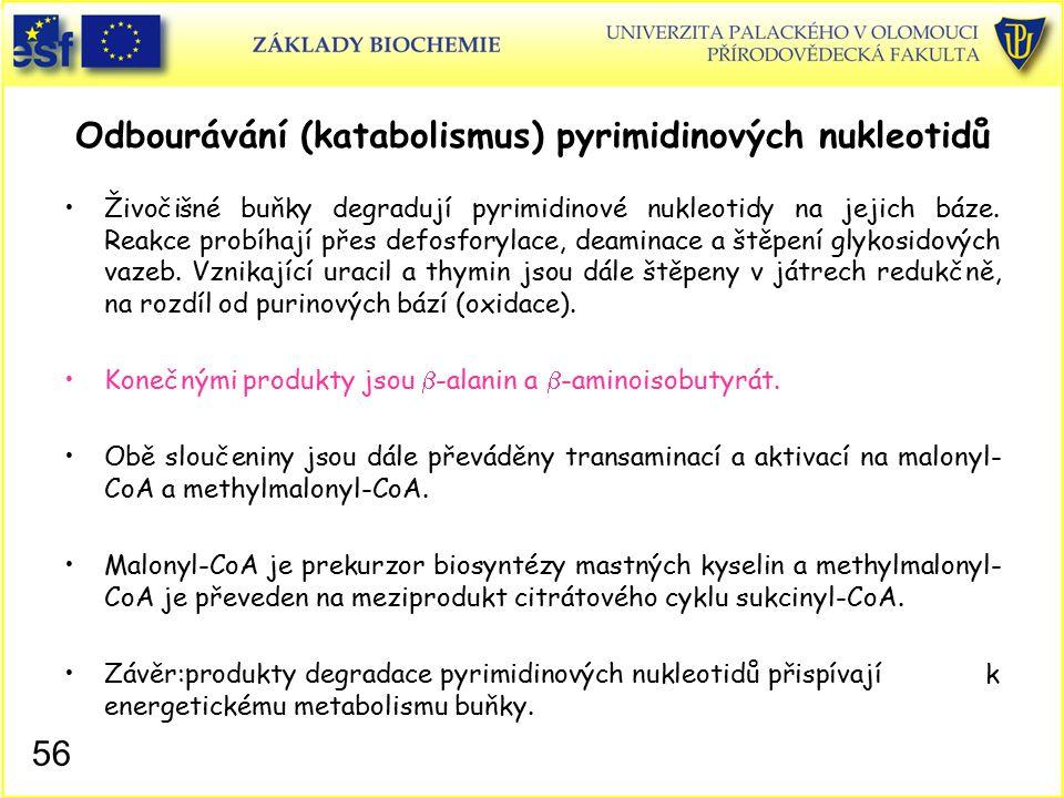 Odbourávání (katabolismus) pyrimidinových nukleotidů Živočišné buňky degradují pyrimidinové nukleotidy na jejich báze. Reakce probíhají přes defosfory