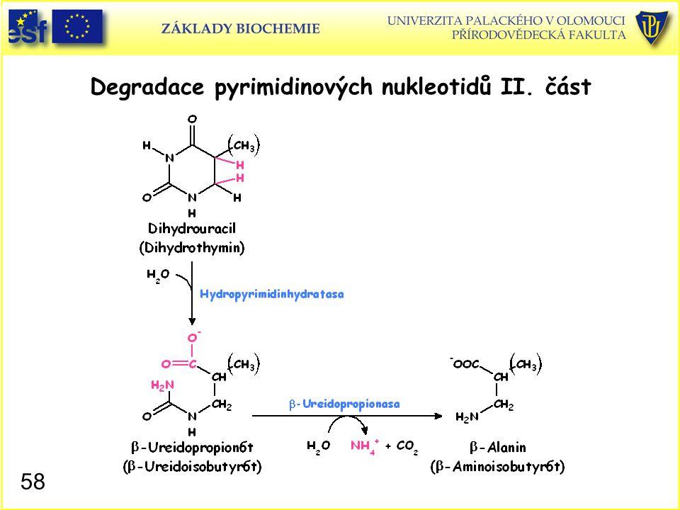 Degradace pyrimidinových nukleotidů II. část 58
