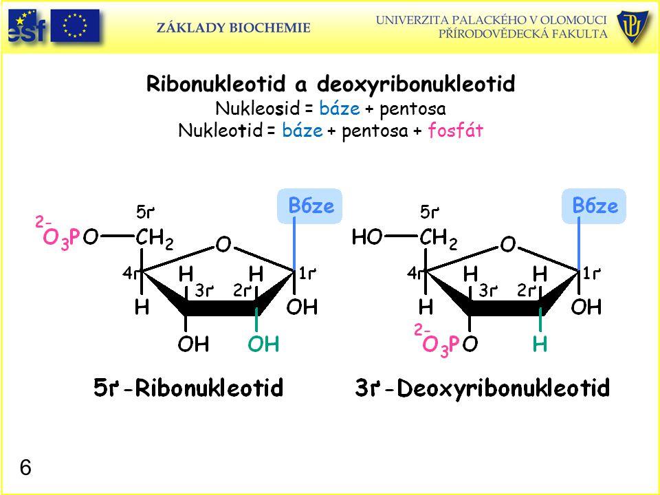 Ribonukleotid a deoxyribonukleotid Nukleosid = báze + pentosa Nukleotid = báze + pentosa + fosfát 6