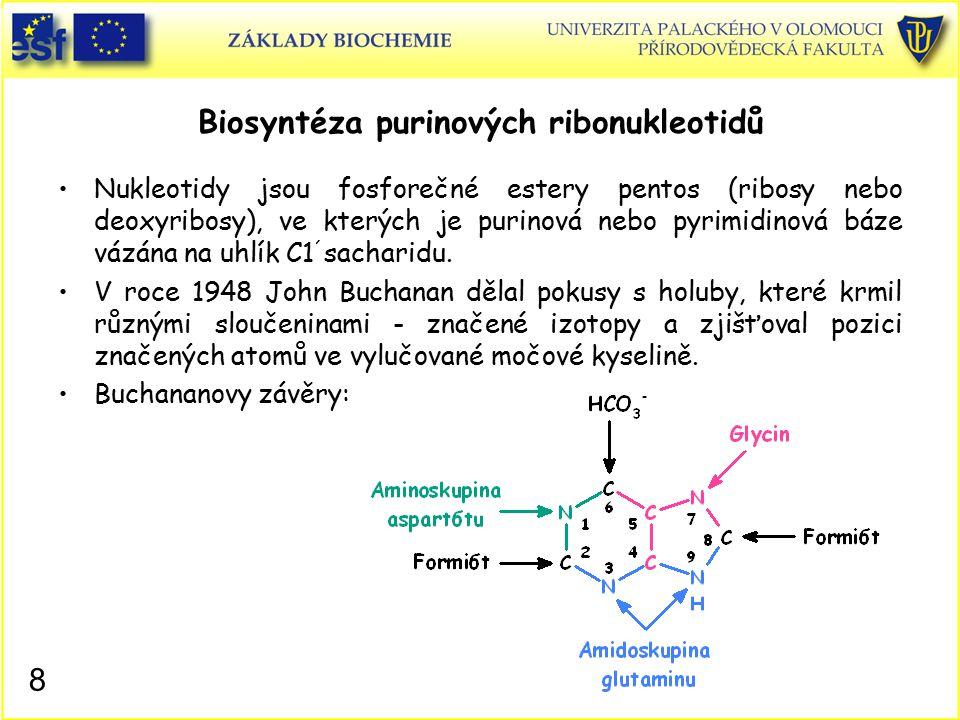 Biosyntéza purinových ribonukleotidů Nukleotidy jsou fosforečné estery pentos (ribosy nebo deoxyribosy), ve kterých je purinová nebo pyrimidinová báze