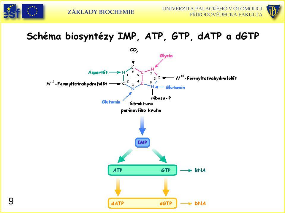Schéma biosyntézy IMP, ATP, GTP, dATP a dGTP 9