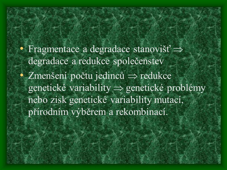 Fragmentace a degradace stanovišť  degradace a redukce společenstev Zmenšení počtu jedinců  redukce genetické variability  genetické problémy nebo