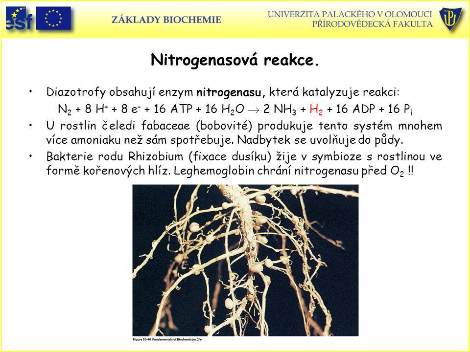 Nitrogenasová reakce. Diazotrofy obsahují enzym nitrogenasu, která katalyzuje reakci: N 2 + 8 H + + 8 e - + 16 ATP + 16 H 2 O  2 NH 3 + H 2 + 16 ADP