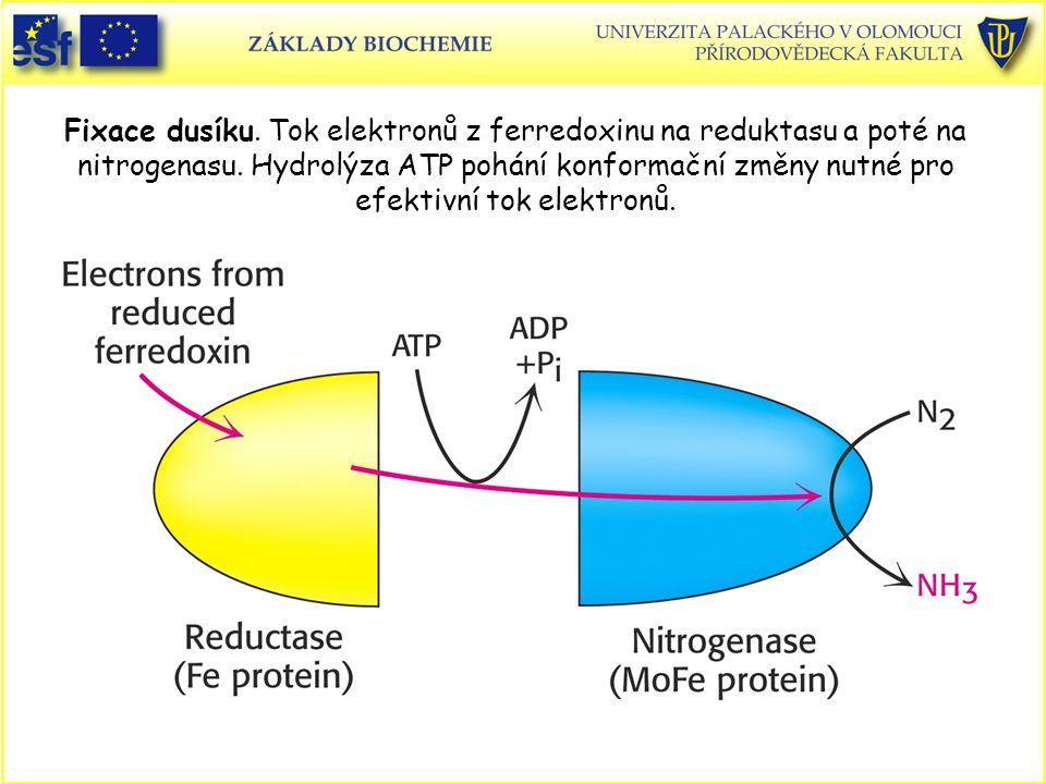 Fixace dusíku. Tok elektronů z ferredoxinu na reduktasu a poté na nitrogenasu. Hydrolýza ATP pohání konformační změny nutné pro efektivní tok elektron