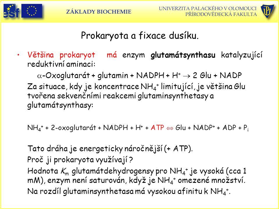 Prokaryota a fixace dusíku. Většina prokaryot má enzym glutamátsynthasu katalyzující reduktivní aminaci:  -Oxoglutarát + glutamin + NADPH + H +  2 G