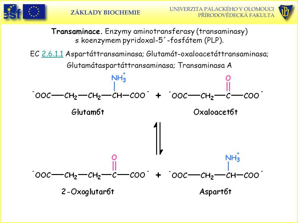Transaminace. Enzymy aminotransferasy (transaminasy) s koenzymem pyridoxal-5´-fosfátem (PLP). EC 2.6.1.1 Aspartáttransaminasa; Glutamát-oxaloacetáttra