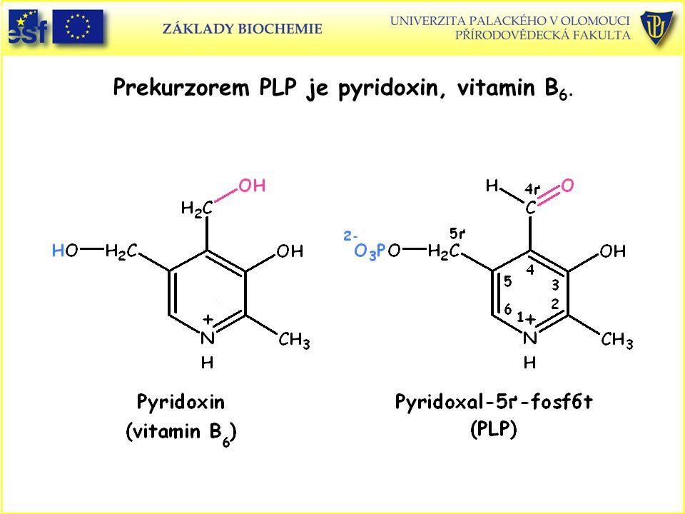 Prekurzorem PLP je pyridoxin, vitamin B 6.