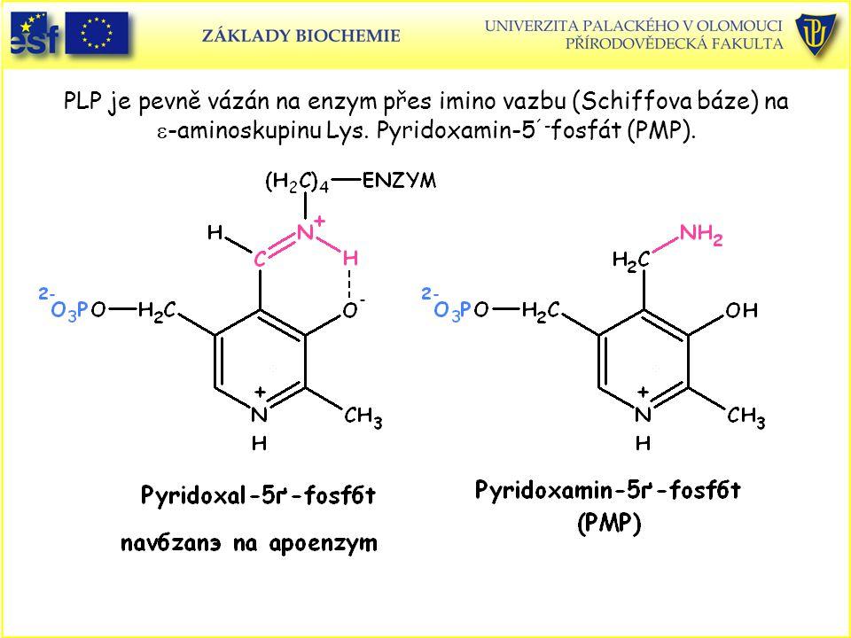 PLP je pevně vázán na enzym přes imino vazbu (Schiffova báze) na  -aminoskupinu Lys. Pyridoxamin-5 ´- fosfát (PMP).