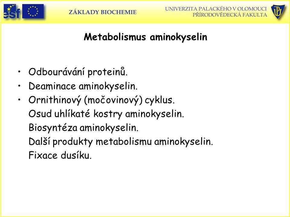 Odbourávání proteinů. Deaminace aminokyselin. Ornithinový (močovinový) cyklus. Osud uhlíkaté kostry aminokyselin. Biosyntéza aminokyselin. Další produ